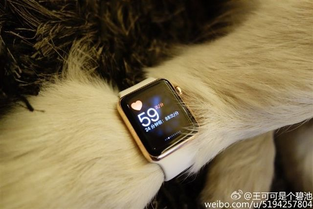 13015 7372 wang si cong dog apple watch4 l Il offre deux Apple Watch Edition...à son chien