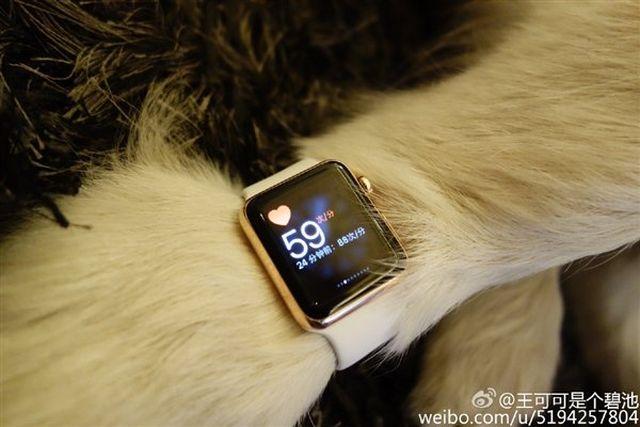 13015 7372 wang si cong dog apple watch4 l Il offre deux Apple Watch Edition...à son chien