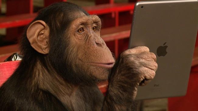 ipad magique e1455033570576 Vidéo : un magicien épate des singes en utilisant liPad