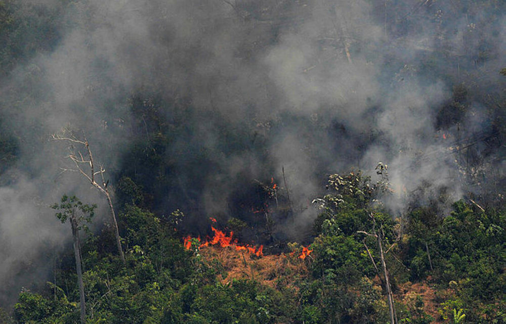 Amazonie Foret Feu 1000x641 Incendies en Amazonie : Tim Cook annonce quApple va faire un don